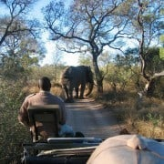 Game drive in Chobe National Park