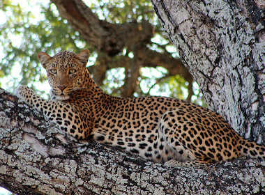 zambia-luxury-safari
