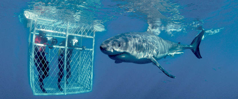 Shark Cage Diving Cape Town Kruger Park Vic Falls