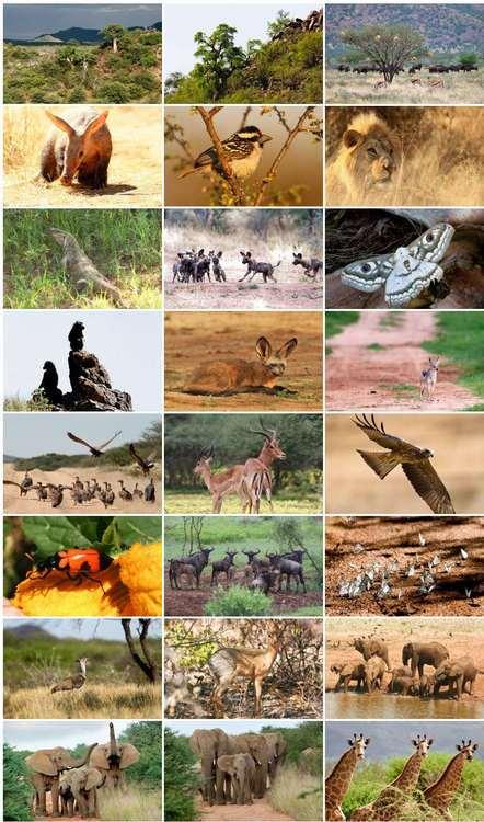 Self Guided Safari Tours Through Africa
